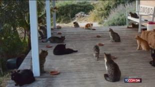 Grecia, accarezzatore di gatti cercasi