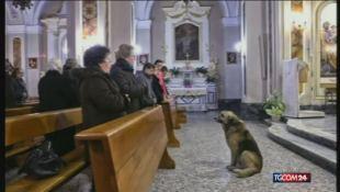 Tommy, il cane che va in chiesa, sta morendo
