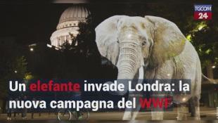 Un elefante invade Londra: la nuova campagna del WWF