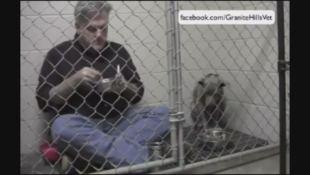 Usa, il veterinario mangia nella gabbia con il pitbull da rieducare