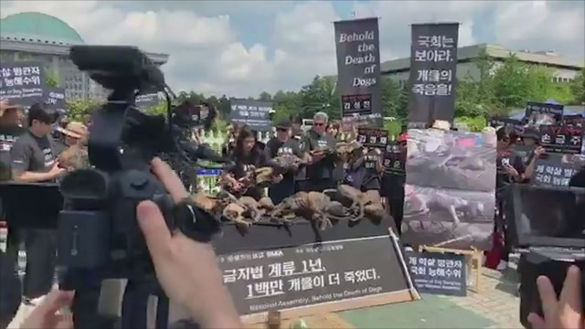 Kim Basinger contro la macellazione dei cani in Corea