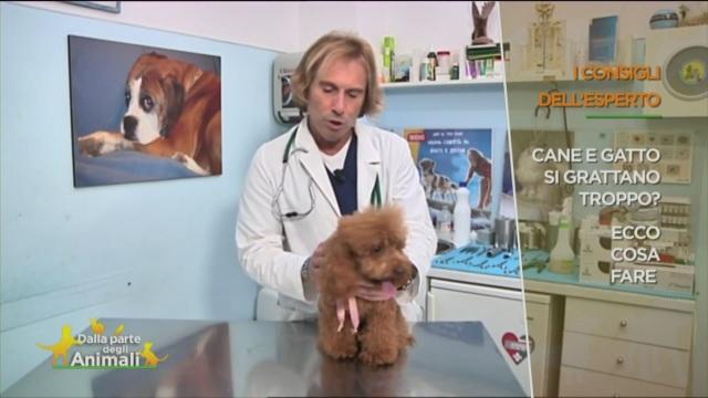 I consigli del veterinario