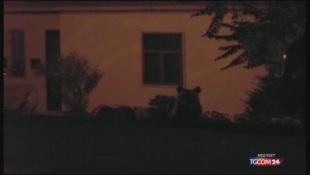 Parco nazionale d'Abruzzo, orso marsicano muore durante la cattura