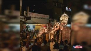 Tikiiri, elefante malato e denutrito, costretto a sfilare in Sri Lanka